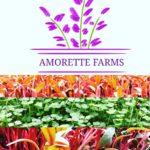 Amorette Farms Microgreens Featured Image