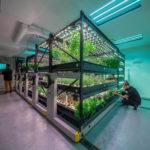 Farm One: Urban Farm of The Future