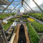 Scintilla Farms Green House in San Diego