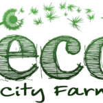 eco city microgreens maryland