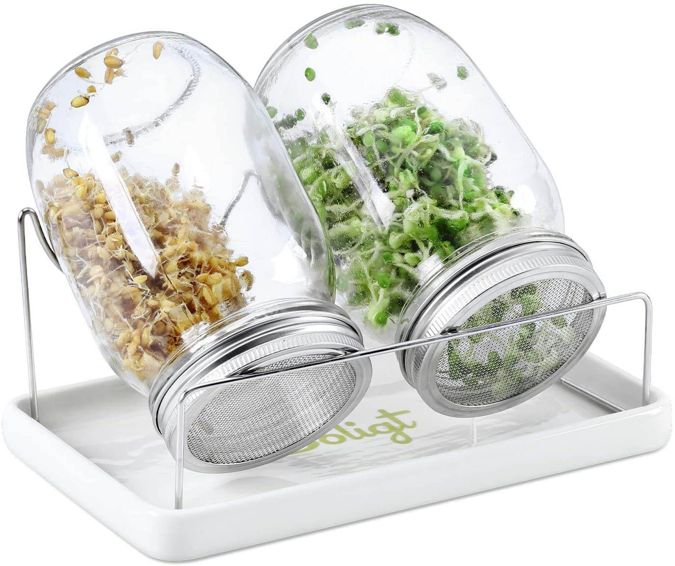 sprouting jars 1